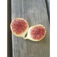 Figa  - Smokva Brogiotto bianco