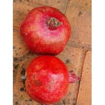 Granatno jabolko Barski sladki