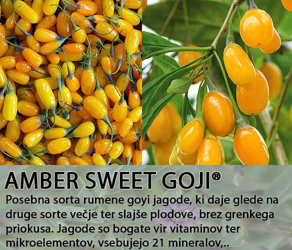 Goyi Amber Sweet